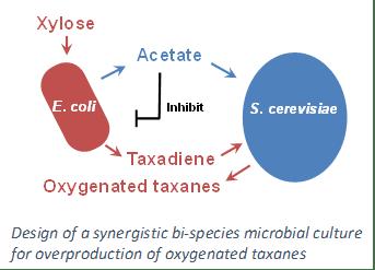Isoprenoids 2