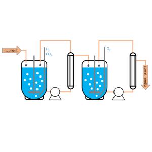 Gas Fermentation
